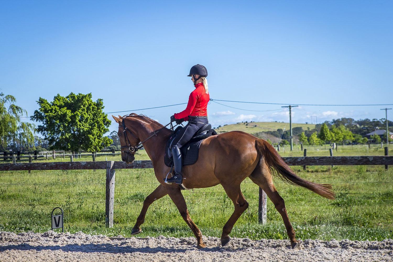 Equestrian-Services-Riding-Horse